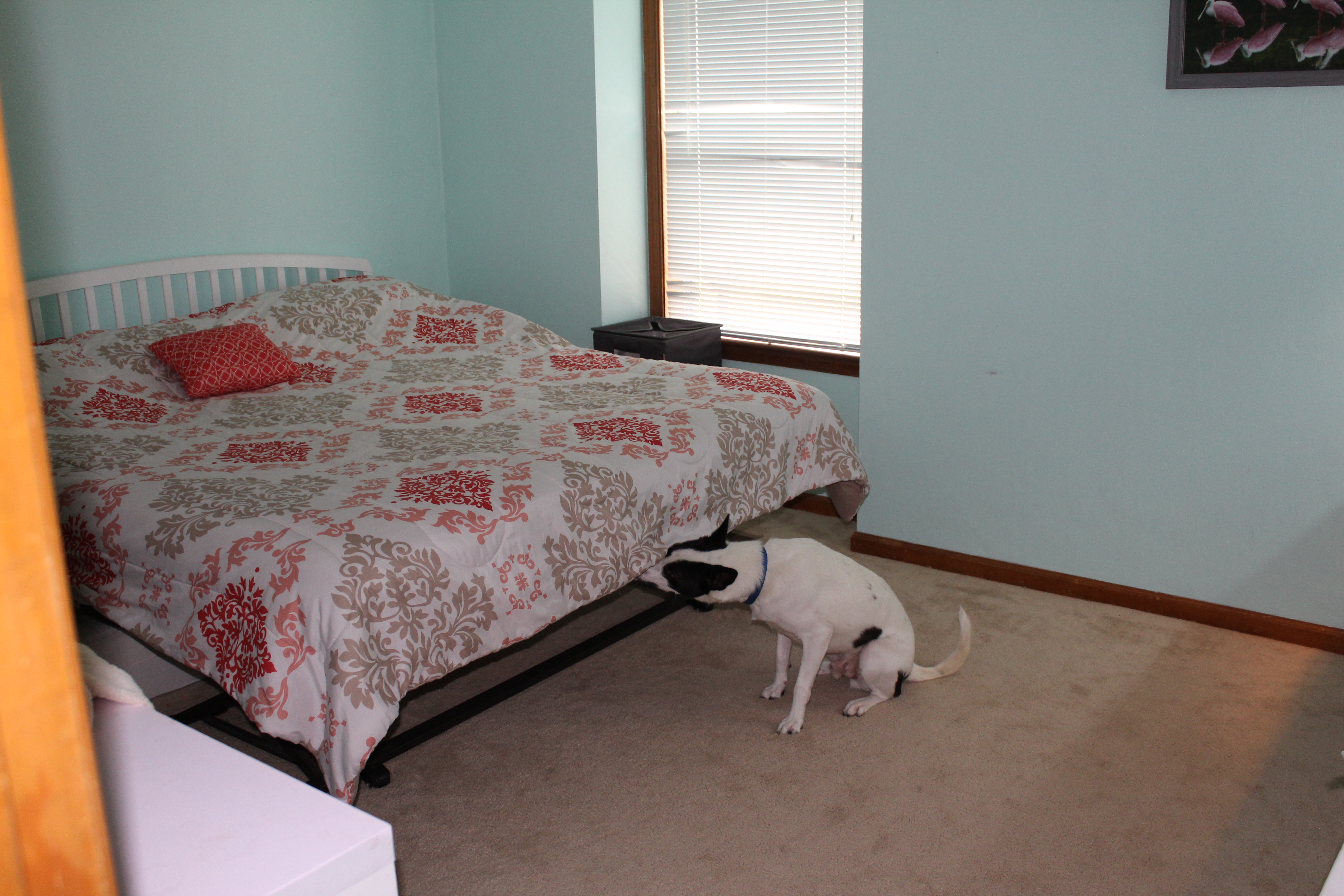 our k 9 unit bed bug company richmond va rva thermal heat With bed bugs richmond va